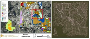 Figure 10. Left image is of the UCF Arboretum Natural Communities ESRI GIS map representing all natural communities by a color coded location. Each natural community represents a list of plant as a species inventory and plant population density data per area. The right image is of the Unreal terrain level representative of a 1,000 x 1,000 meter sample area of the real arboretum terrain, trails, and waterbodies found in the Natural Communities map area marked with the red square.
